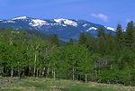Scenic view of snowy mountains above the trees