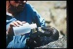 Eagle  Birds of Prey National Conservation Area  BOP  Owyhee Field Office  LSRD  Lower Snake River District