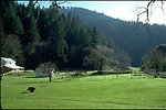 Rogue River Ranch - View of field with barn and back of Tack House.