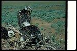 Slaters Flat  Ferrugenous Hawk  Birds of Prey National Conservation Area  BOP  Owyhee Field Office  LSRD  Lower Snake River District