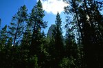Rock formation and trees in the Humbug Spires Wilderness Study Area