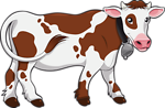 cute cow animal
