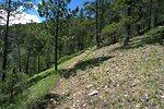 Hiking trail on a grassy slope in the Judith Mountains