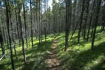 Hiking and game trail in the Judith Mountains