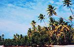 Mangroves colonizing sandy beach