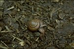 Rogue River - Snail on Rogue River trail.