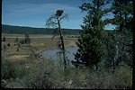 Osprey Nest at Gerber Reservoir.