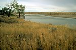 Tall grass along the banks of the Yellowstone River