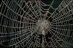 Rogue River - Spider Web.