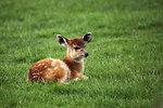 Baby antelope
