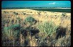 Kuna  Crested Wheatgrass  Range Restoration Project