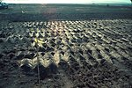 Seeding  Range Restoration Project  Lower Snake River District
