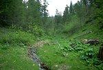 A stream flowing through a luxuriant riparian area