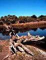 ACE Basin National Estuarine Research Reserve.  A natural tidal pond on Otter Island.