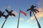Three palms and flag