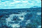 Habitat of Gilia leptomeria  Wildflower