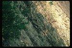 Rose  Solidago  Control erosion  Brush, grasses  Wildflowers