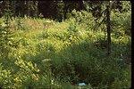 Habitat,  Moonwort  Wildflower