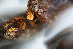 Wet rock in river