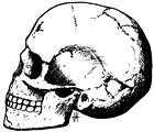 Early modern skull so-called Qafzeh 11 (a child 11 years old), in the Carmel Range (Israel). ESR dates for Qafzeh (90,000 BP) Español:  Cráneo de Moderno Primitivo de Qafzeh nº 11 (un niño de 11 años), monte Carmelo (Israel). Data de unos 90 000 adC