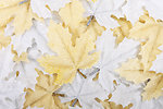 Leaves decoration background