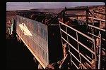 Wild horse transportation  Wild Horse and Burro Adoption Program  LSRD  Lower Snake River District