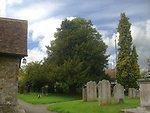 Yew in Lenham Churchyard