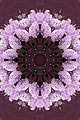 Unreal hyacinths