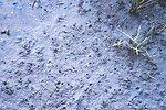 Tidal mudflats