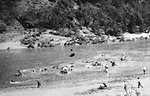 Swimming pack animals and stock across the Rogue River.