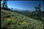 Mt. Shasta from Pilot Rock with wildflower and phlox site, Cascade-Siskiyou National Monument (CSNM).