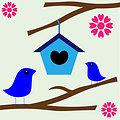 Cute birds love nest