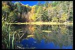 Pond near Elk Creek.