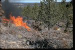 This photo is of a multi-phased project. Juniper was initially cut to get fuel on the ground and after a year of curing it was burned. It was part of a project to eliminate junipter in an aspen stand. Total project was about 100 acres. It was burned in la