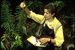 Field worker conducting an amphibian study.