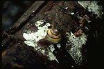 Macro shot of a snail.