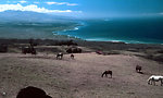 Horses in paradise - on the Parker Ranch.