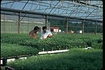 Many seedlings in a structure at the Horning Seed Orchard.