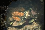 A starfish in the Yaquina Tidepools.