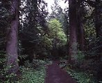 Scenic view of North Umpqua Recreational Trail in Swiftwater.