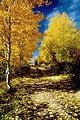 Fall colors near Lily Lake on Steens Mountain.  Mark Armstrong, Burns  Landscape1