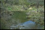 Beaver pond in Douglas Creek recovering.  Douglas County, WA.