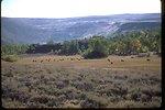 Steens Mountain Whorehouse Meadow.