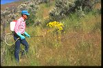 Ken Tupper, county weed supervisor, spraying weeds on BLM land in Rodgersbury, Washington, along the Snake River.