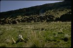 Sheep horns in the prairie grass of Orejana Canyon Wilderness Study Area.