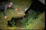 Person looking into a lava tube opening with ferns growing inside at Clarks Butte Wilderness Study Area.  OR 3-120