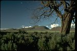 Tree and sagebrush with Sheephead Mountain in the background.  OR 2-72J