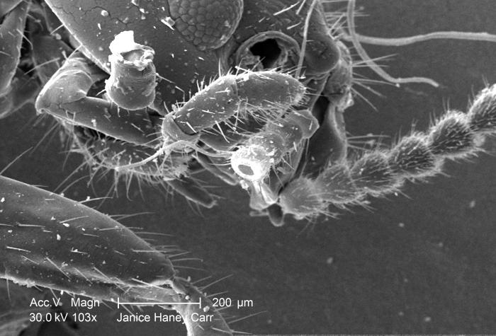 Under a reatively-low magnification of 103X, this scanning electron micrograph (SEM) revealed some of the ultrastructural morphology found o