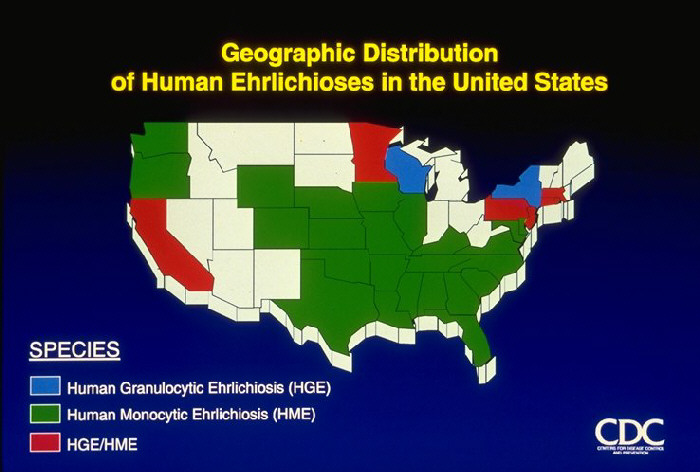 Geographic Distribution of Human Ehrlichioses in the United States, 1986-1996 (map)