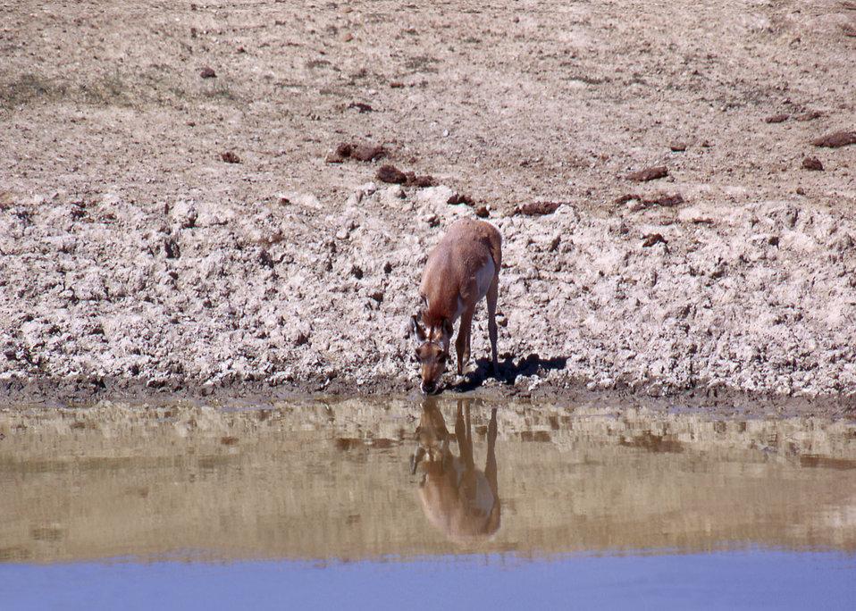 Antelope on a Wildlife Range in Arizona.
